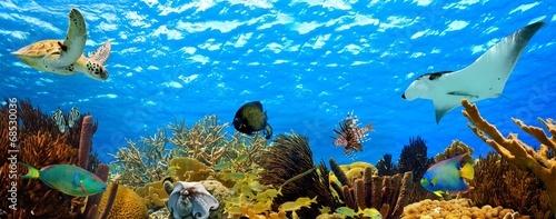 podwodny panorama tropikalny koralowej w morzu Karaibskim