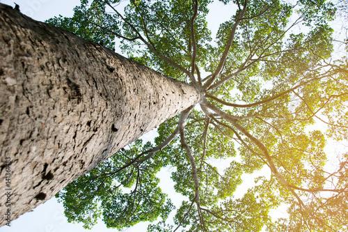Rodzaj drewna i efekt światła słonecznego