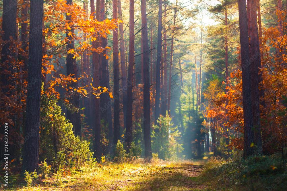 Jesienny las scena