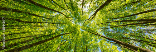 Patrząc na zielone wierzchołki drzew. Włochy