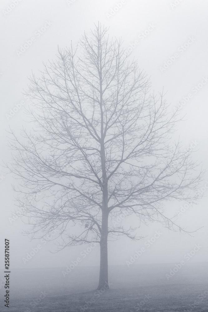 Drzewa We Mgle