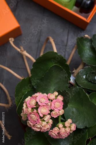 fashion lady zainstalować z aromatem i ojczyste kwiaty wokół czarne tło