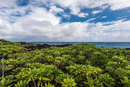 Wulkaniczne wybrzeżu w Hawaje park Narodowy wulkany Hawaii, Stany Zjednoczone