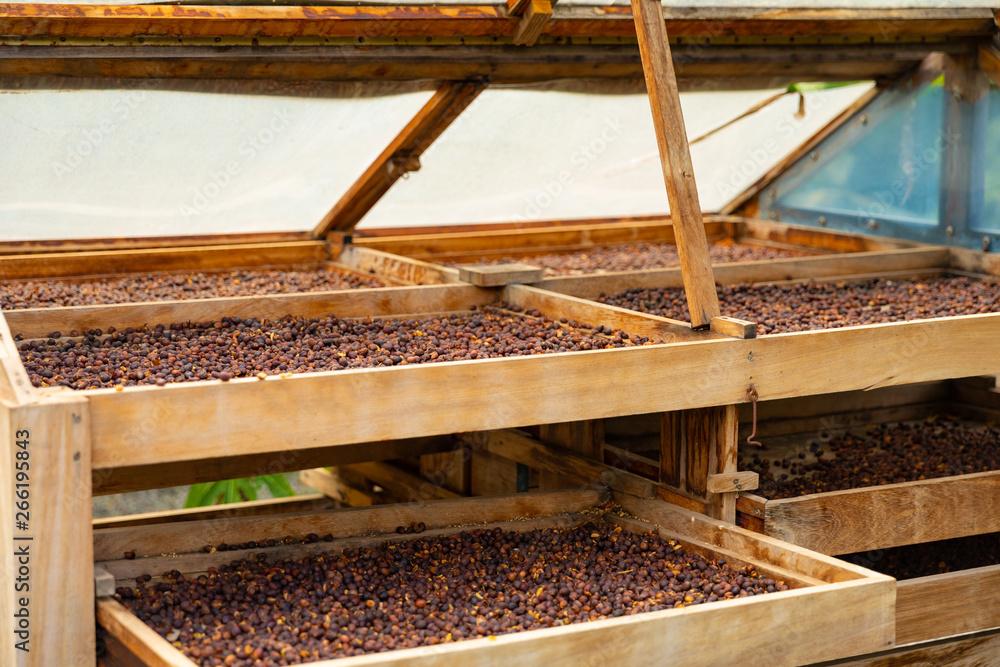 Z boku organicznych ziaren kawy, suszenia w skrzynie podłogowe