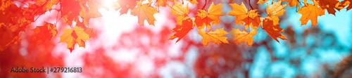 Transparent tło jesień