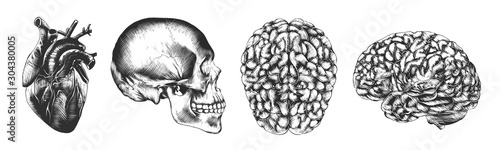 Wektor ilustracji grawerowane styl plakatów, wygląd i logo. Ręcznie rysowane szkic czaszki, serca i mózgu w monochromatyczne na białym tle na białym tle. Szczegółowe stylu retro drzeworyt z rysunku.