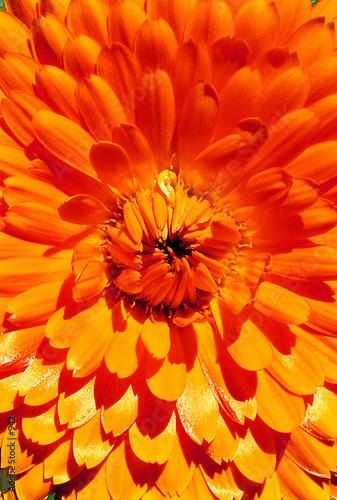 kwiat w sercu pomarańczowy