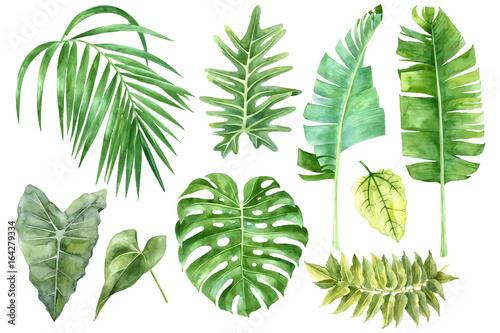 Zestaw akwarela liści tropikalnych