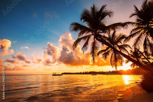 Sylwetka palmy na tropikalnej plaży, Punta Cana, Dominikana