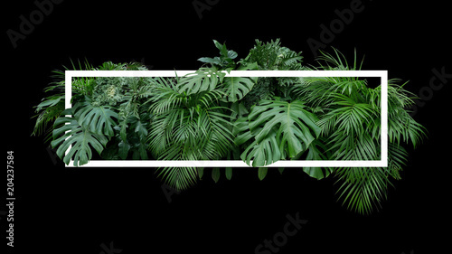 Tropikalne liście, liście dżungli tło natura rośliny krzew z białą ramką na czarnym tle.