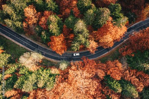 Samochód na drodze, w otoczeniu lasu jesienią. Karpaty, Rumunia