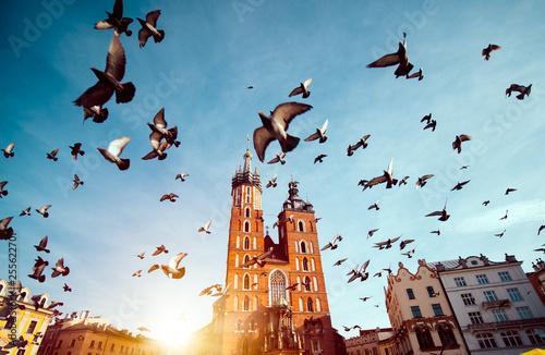Bazylika Najświętszej Marii panny na rynku głównym w Krakowie, latające gołębie