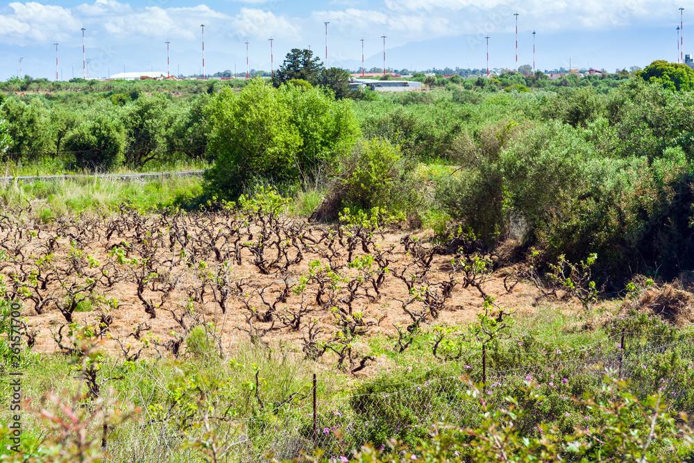 Wiosenny krajobraz, winnice na wyspie Kreta, Grecja, Europa.