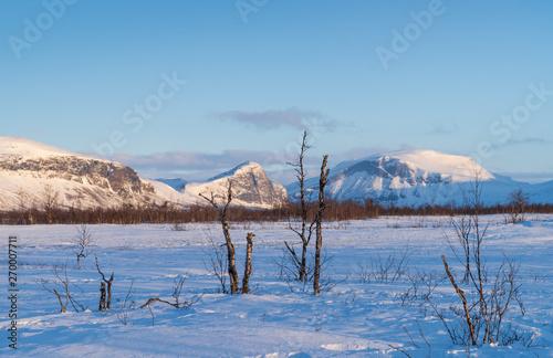 Arktyczny krajobraz z березками i góry w pobliżu jeziora Sitojaure na słynną trasę droga królewska. Laponia, Szwecja.