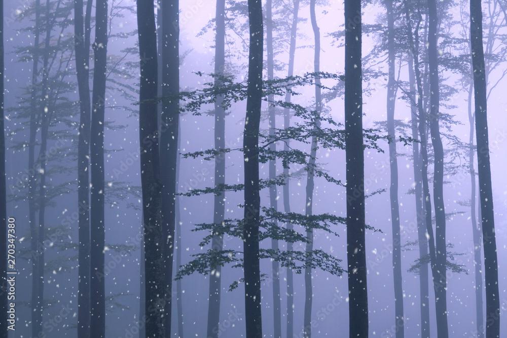 Zimowy mglisty las drzewa ze śniegu