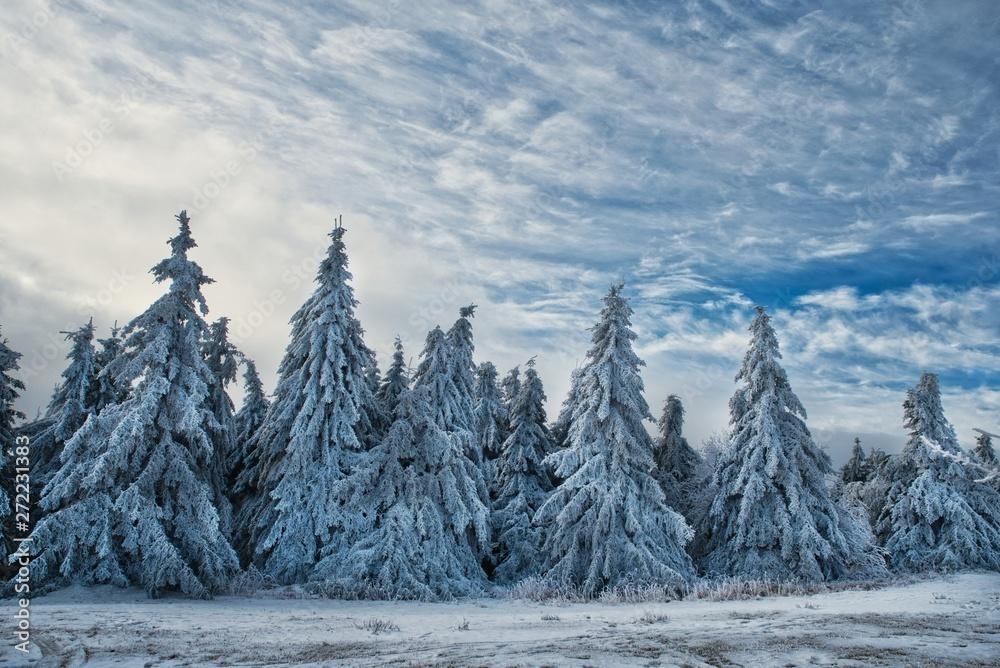 Zimowy krajobraz ze śniegiem świerki bedekten