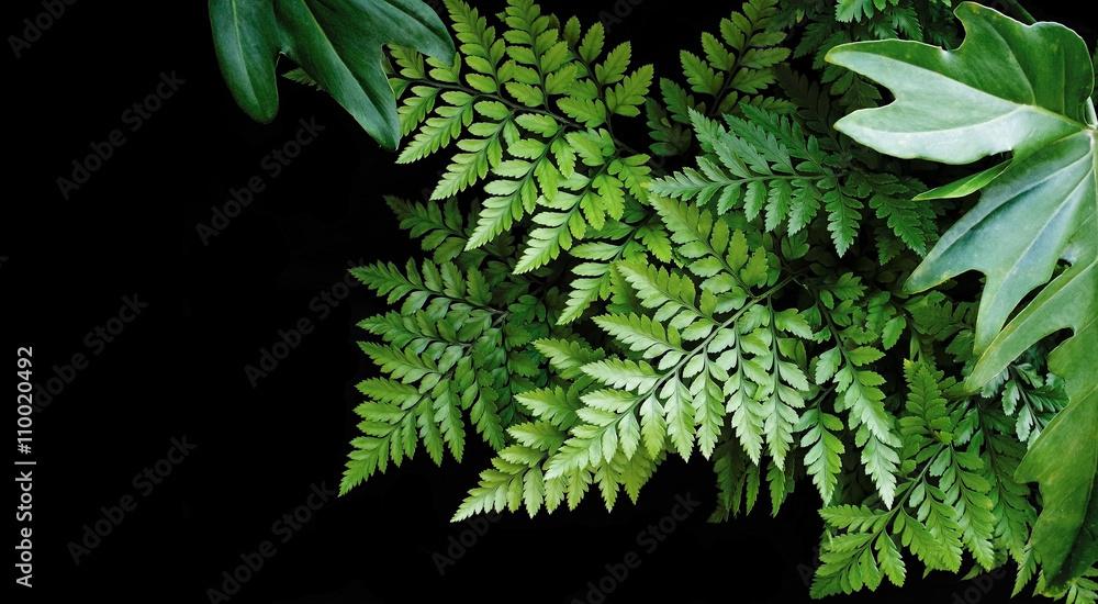 Zielone liście na czarnym tle, miękka ostrość, tropikalny las współpracy