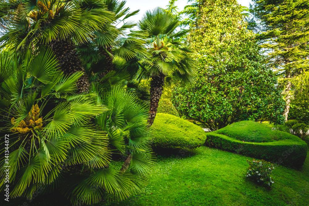 Palmy, trawniki, słoneczny dzień
