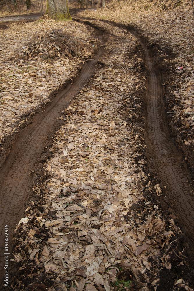 Ślady kół na brudnej ziemi w lesie