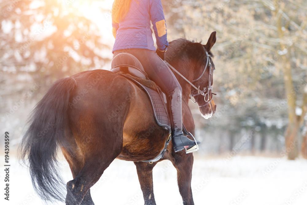 Гнедая konia z żeńskich jeźdźca kłusem po leśnych ścieżkach pola. Konny koncepcja obraz z kopia miejsce