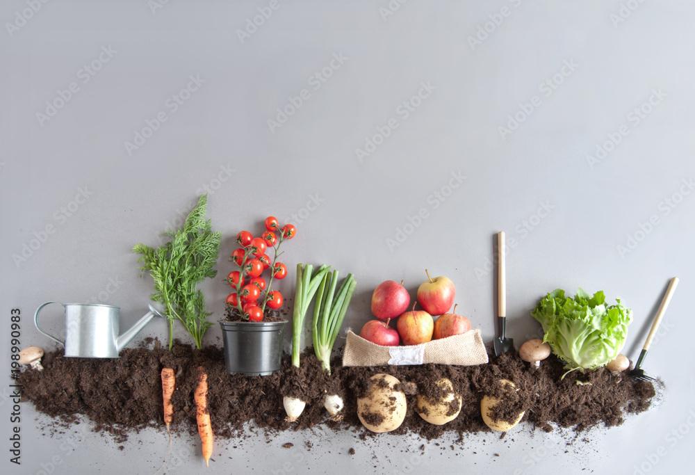 Organicznych owoców i vegtable ogród tło