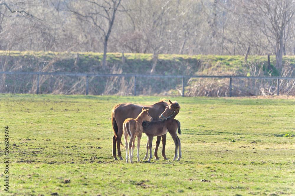 Rodzinne konia