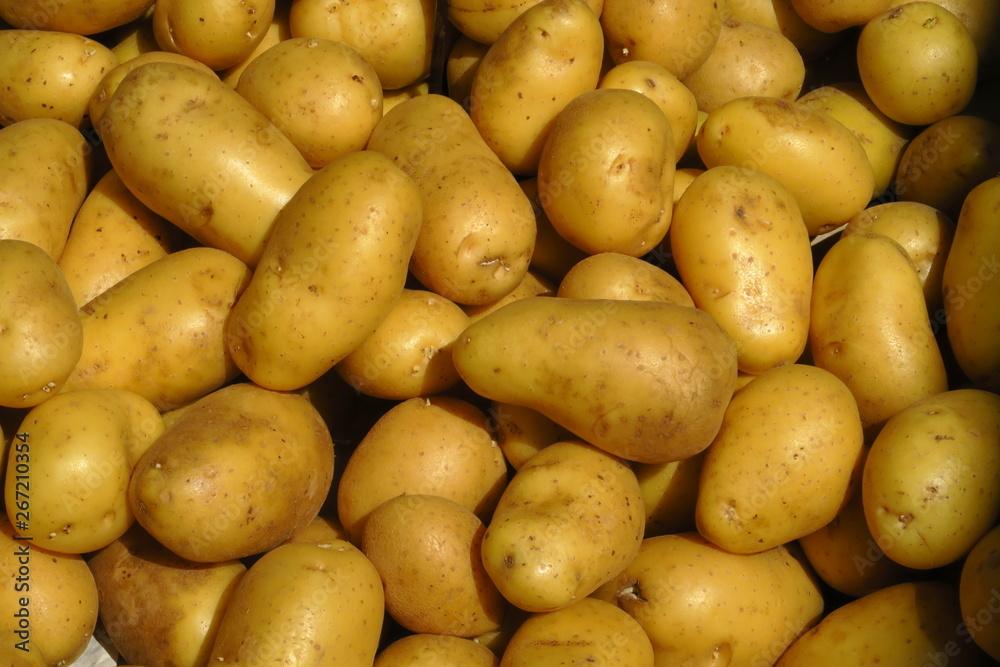 Ziemniaki aktualności