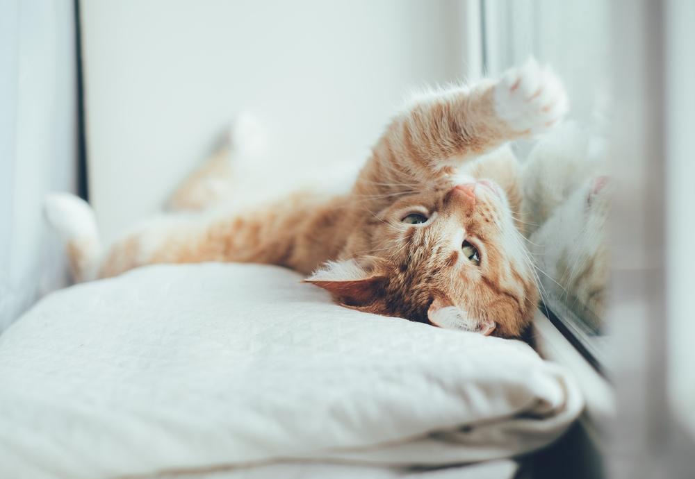 Jak usunąć kocią sierść z rolet?